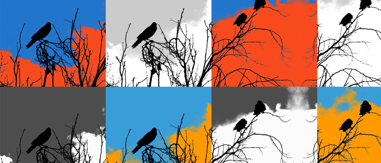 image editing of a bird